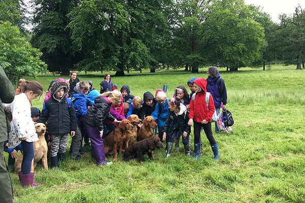 Countryside learning animals